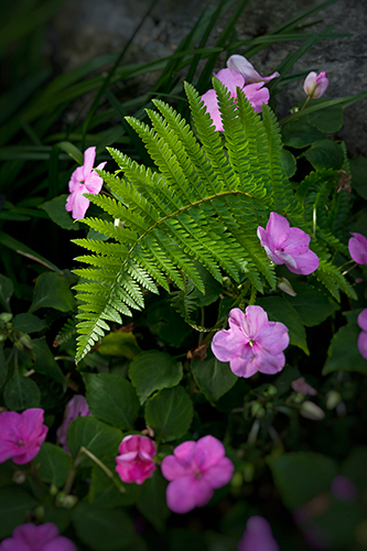 Fern and Impatiens