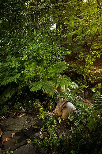 Marcia's Garden