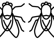deux mouches - le Français illustré
