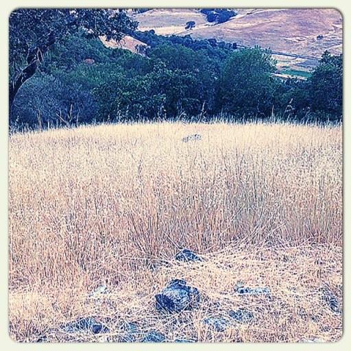 retreat reeds