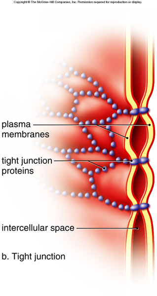 Stomach Cells Different