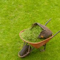 La manutenzione del verde: servizio o lavoro? (Deliberazioni AVCP n. 87/2002 e 72/2007)