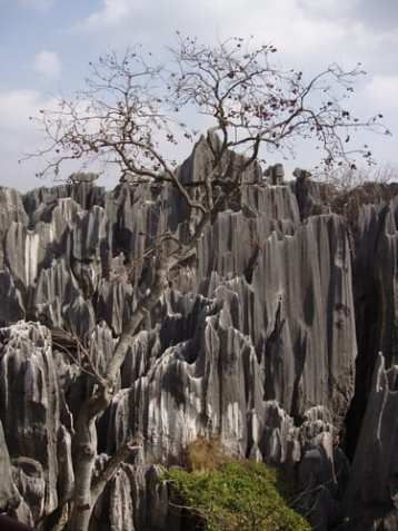 stone-forest3