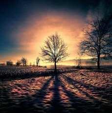 Ln_tree (11)