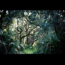 Ln_tree (14)