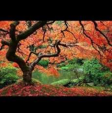 Ln_tree (4)