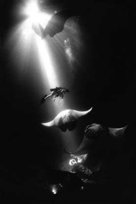 Midnight Manta Rays, Kona, Hawaii