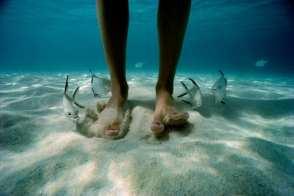 Pompano Fish and Feet, US Virgin Islands