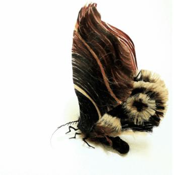 Insetti (8)