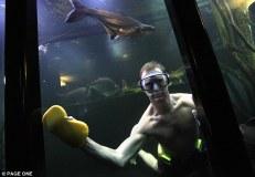 Guinnes Aquarium LN (3)