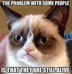 grumpy-cat-meme-jpg_163424