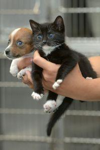 kitten_4
