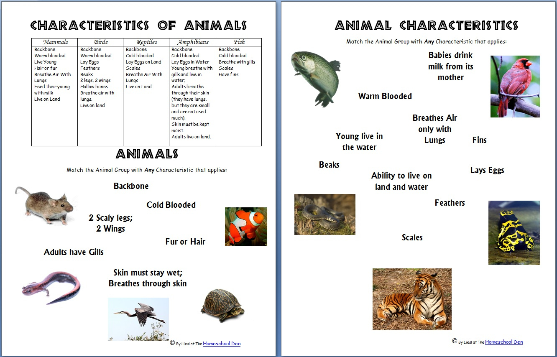 Free Printable Worksheets On Vertebrates And Invertebrates