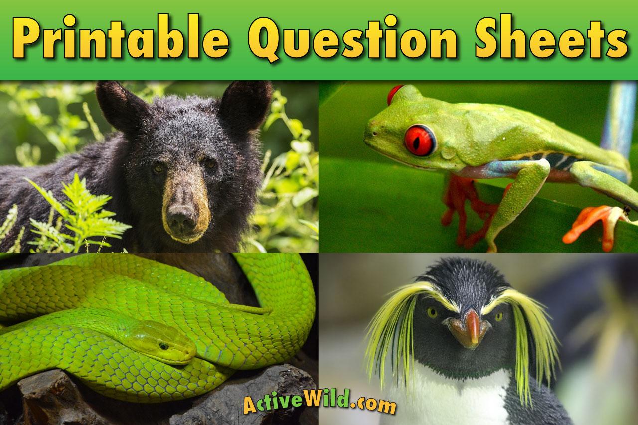 Free Printable Reptile Worksheets