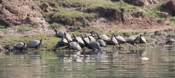 Hard-shell turtles