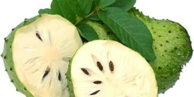 Things You Do Not Know About Soursop
