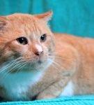Краткое описание породы: Беспородные и метисы. Объединяющее разнообразие беспородных котов Характер беспородных кошек