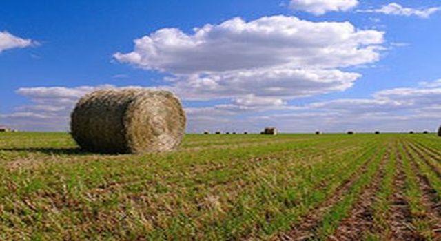 champs agricoles