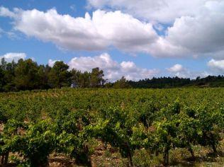 Paysage de vigne : dans le Sud-Ouest de la france