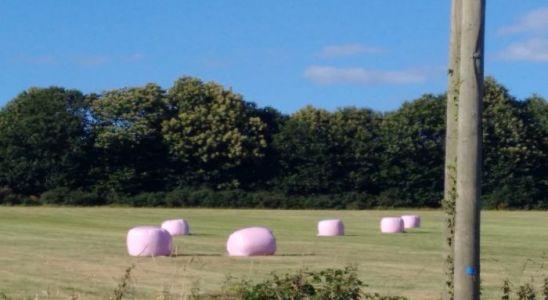 champs en Mayenne et rounrballers