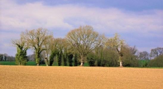une vue de la Mayenne agricole