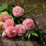 Les roses de Sophie à Samuel Paty