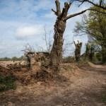 Des arbres abbattus et des haies détruites