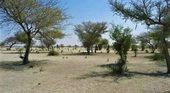 Le désert du Sahel en Afrique