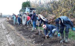 Plantation d'arbres volontaire en Mayenne