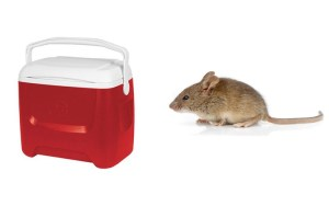 Cooler_mouse