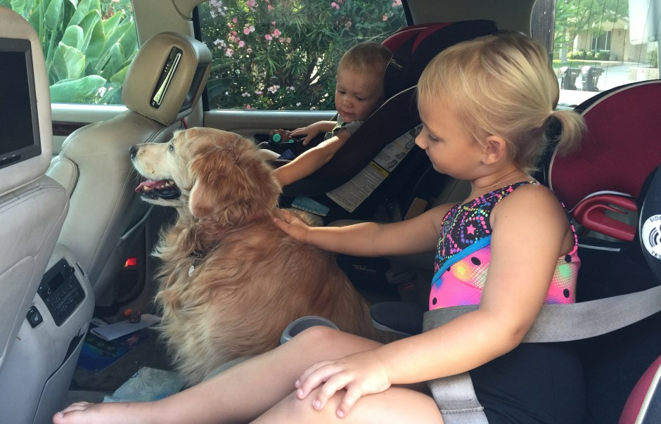 an open apology to my dog after having kids