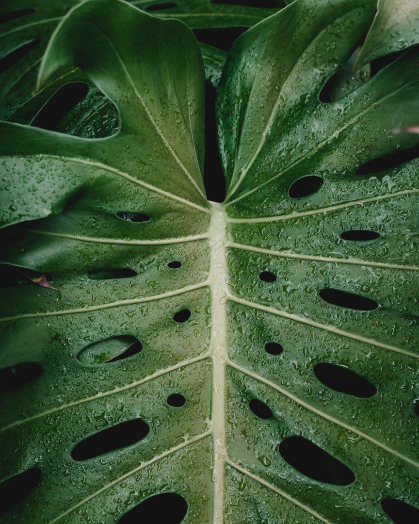 plante transpire