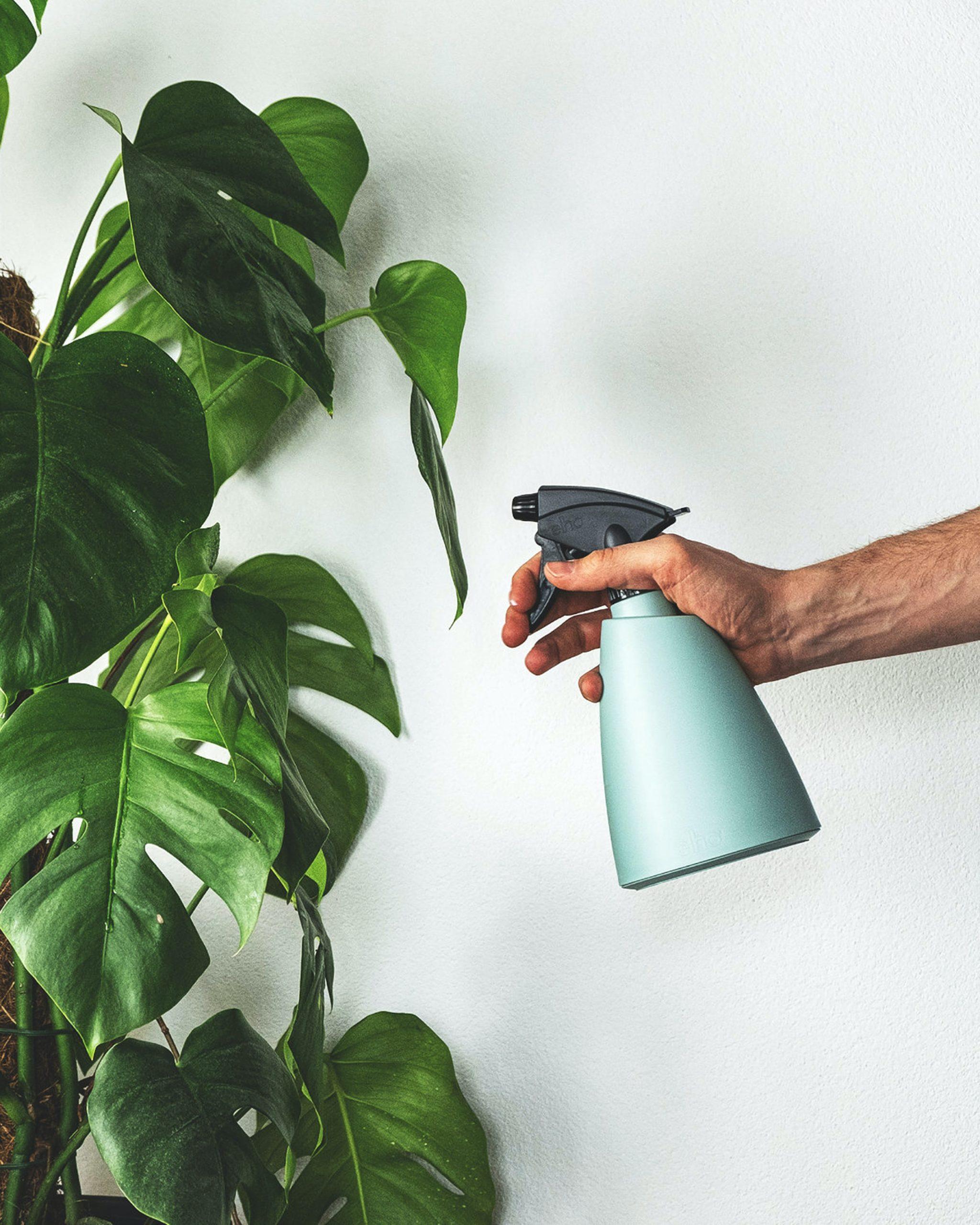 comment arroser une plante