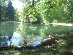 Le parc et l'étang de Bistra