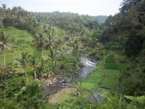 Rizière à Ubud - Bali