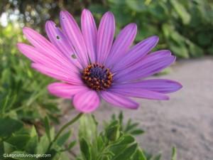 Fleur Andalousie