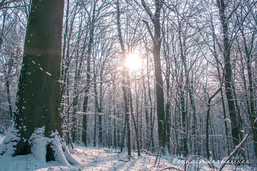 soleil forêt neige