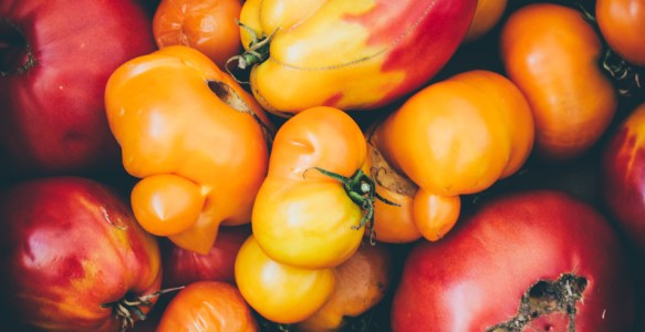 Conserves de tomates