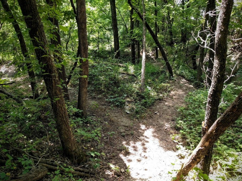 The trail passes through a small gully, with several alternate paths, all leading to the same point. Try more than one, and see which you prefer!