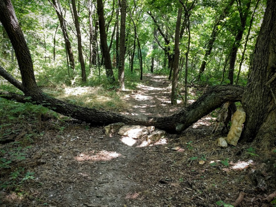 There are a number of log-overs on the Mt. Lehigh Trail. Most of them are ramped, so that they're easily rollable.