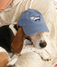 New England Basset Hound Rescue