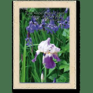 quote-Irises