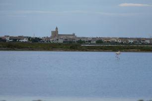 L1060342-klein-flamingo