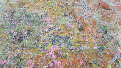 Leica-Hunting-Blog_Chris-Rogers_droppings-klein