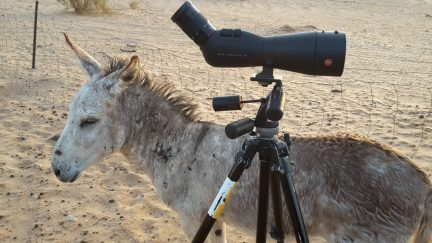 Even-a-Donkey-recognizes-quality-when-he-sees-it-Copyright-Martijn-Verdoes