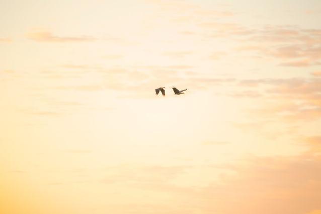 13_Two-Hadeda-in-early-morning-ligh-Kopie-klein