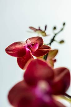 18_Orchid-at-Western-Cape-klein
