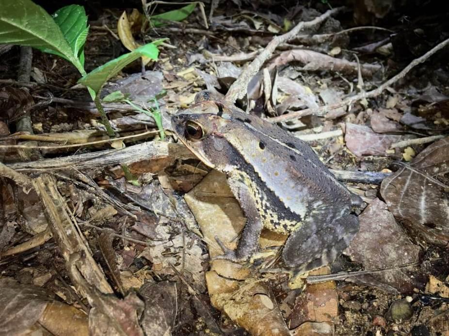 15-Gulf-Coast-Toad-1025x769