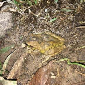 34-Variable-Treefrog-1025x1025-1