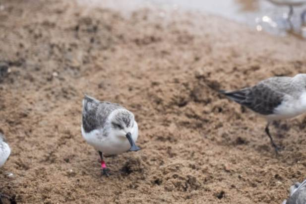 Blog-Spoonie-Sand-1025x683